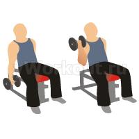 Попеременный подъем гантелей на бицепс, сидя на наклонной скамье