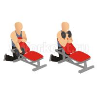 Подъем гантелей на бицепс с упором на наклонной скамье