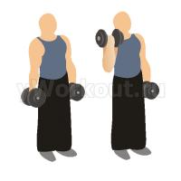Подъем гантелей на бицепс с вращением стоя