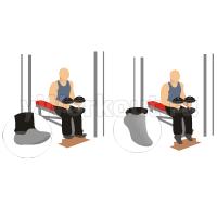 Подъем на носки с гантелями сидя