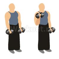 Попеременные сгибания рук с гантелями стоя (обратным хватом)
