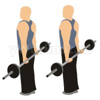 Сгибание запястий со штангой (руки за спиной)